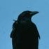Avatar de Mr. Crow