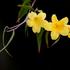 Avatar de jasminechilds