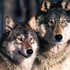 Avatar for wolfchild23