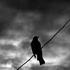 Avatar for blackbird_77