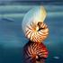 Avatar for Nautiloidea