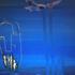 Avatar for grae_88