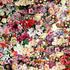 Avatar for tilly_petals