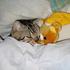 Avatar for kittenishly