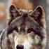 Avatar für wolfgang3us2000