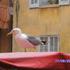 Avatar de Steffivogel