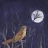 Avatar for nightingale_I