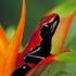 Avatar for frogger3d