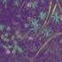 Avatar for ishlilton