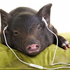Avatar di SoundPiggy