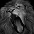Avatar for LionSimbaking
